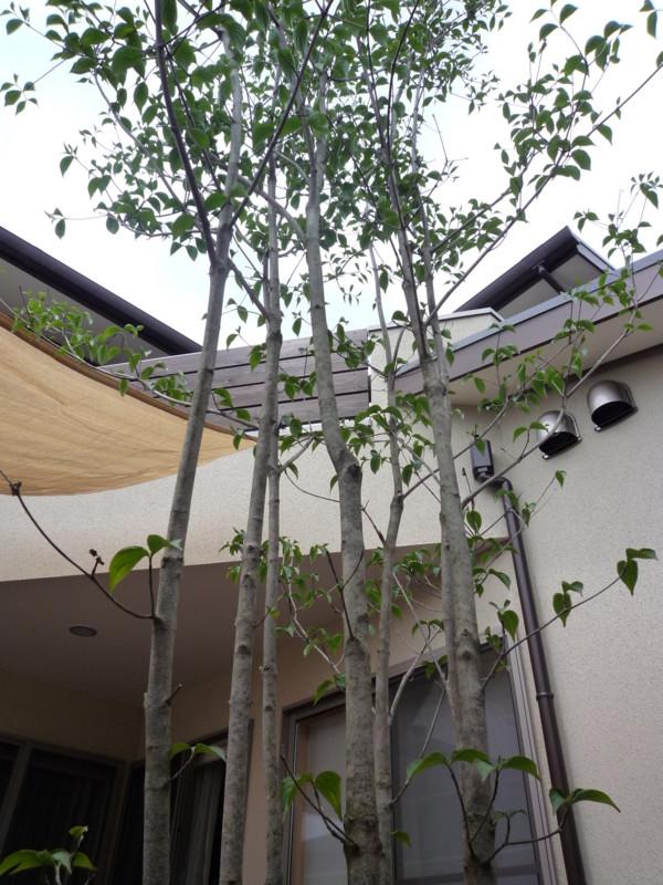 f:id:miwako-yoshida:20100509123538j:image