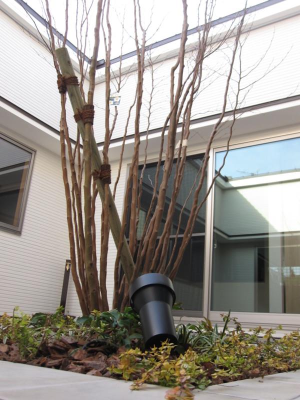 f:id:miwako-yoshida:20110219160424j:image
